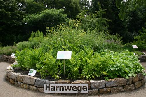 Goethe-Universität — Harnwege