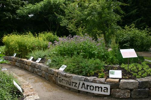 Goethe-universität ? Gewürz/aroma Pflanzen Kultivieren Aromatische Gewurze Garten